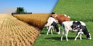 Tarım ve Hayvancılık Sektörü